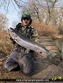 "34"" Rainbow Trout caught on Lake Ontario"