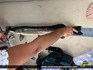 """33"""" Northern Pike caught on Christie Lake"""