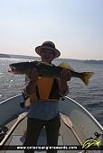 """27"""" Walleye caught on Perrault Lake"""