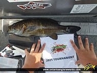 """18"""" Smallmouth Bass caught on Little Brother Lake"""