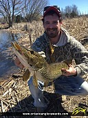 """34"""" Northern Pike caught on Trent River"""
