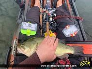 """18.75"""" Largemouth Bass caught on Ottawa River"""