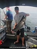 """36"""" Chinook Salmon caught on Lake Ontario"""