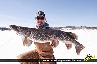 """41"""" Northern Pike caught on Lake of the Woods (Locke Bay)"""