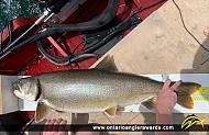 """36.5"""" Lake Trout caught on Lake Ontario"""