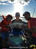 """31"""" Brown Trout caught on Lake Ontario"""