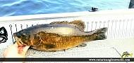 """21"""" Smallmouth Bass caught on Otty Lake"""