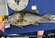 "20"" Smallmouth Bass caught on Bass Lake"
