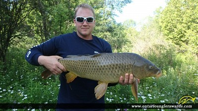 "31.00"" Carp caught on Cobourg Creek"