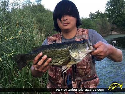 "18"" Largemouth Bass caught on Berczy Park Pond"