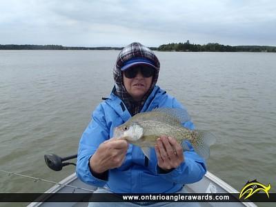 "13"" Black Crappie caught on Wabigoon Lake"