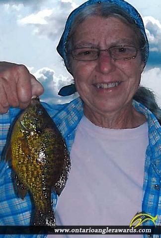 "9"" Pumpkinseed caught on Galeairy Lake"