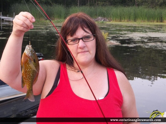 "9.00"" Pumpkinseed caught on Christie Lake"