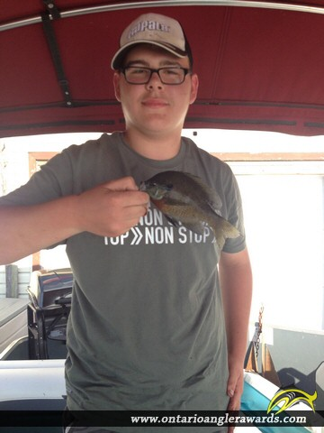 """9"""" Bluegill caught on Canal Lake"""