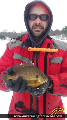 "9.75"" Bluegill caught on 1st Depot Lake"