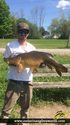 "31.4"" Carp caught on Little Lake"