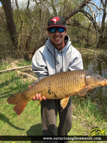 "37.00"" Carp caught on Speed River"