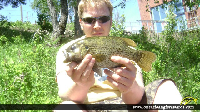 """11.50"""" Rock Bass caught on The South River"""