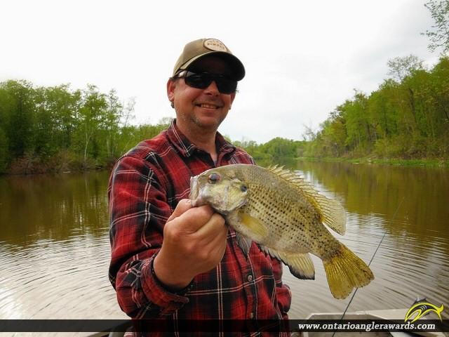 "10"" Rock Bass caught on Wabi River"