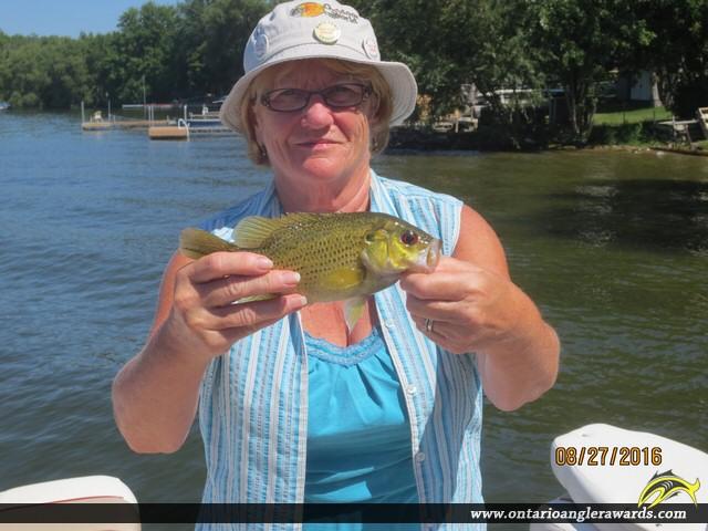 "10"" Rock Bass caught on Chemong Lake"