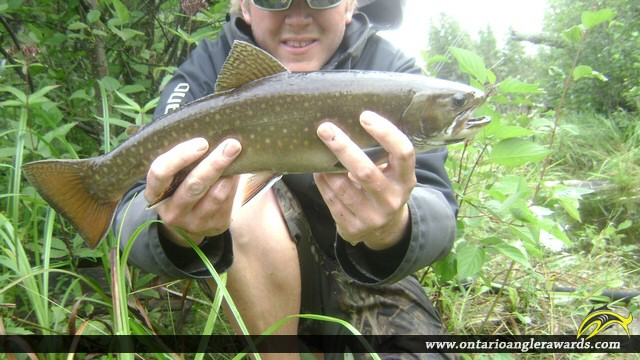 """18.00"""" Brook/Speckled Trout caught on Wolf River"""