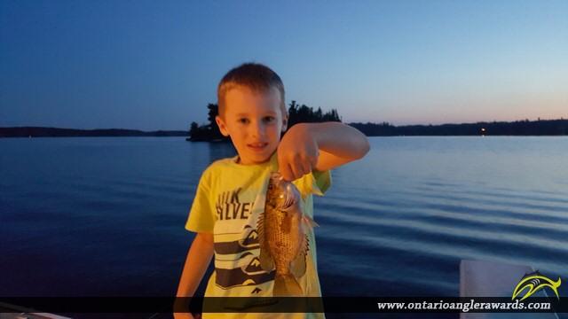"11"" Rock Bass caught on Longbow Lake"