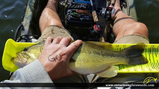 """18.25"""" Largemouth Bass caught on White Lake"""