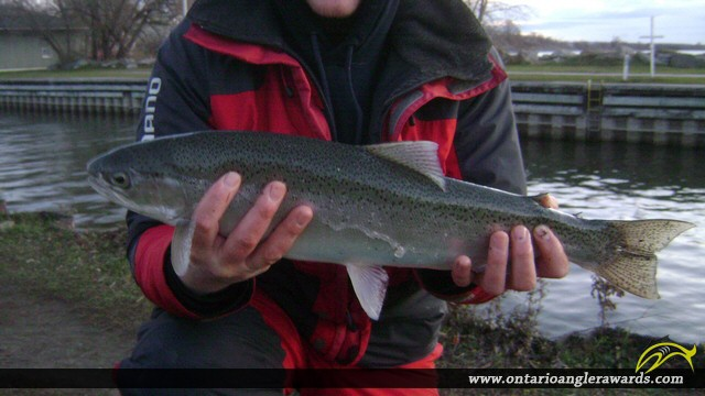 "22.00"" Rainbow Trout caught on Ganaraska River"
