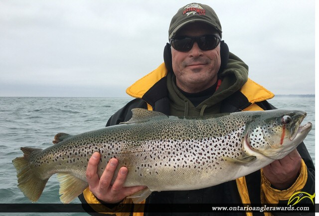 "30"" Brown Trout caught on Lake Ontario"