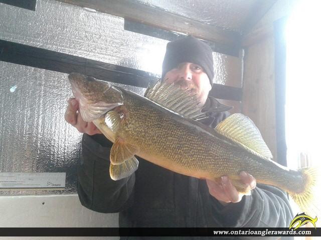 """26"""" Walleye caught on Lake Rosseau"""