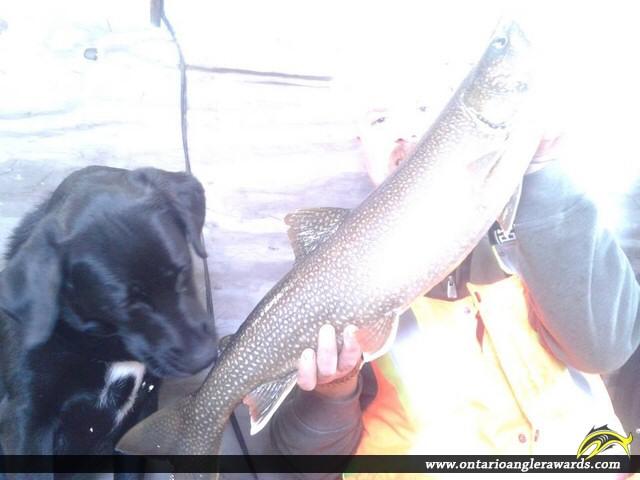 "29"" Lake Trout caught on Lake Rosseau"