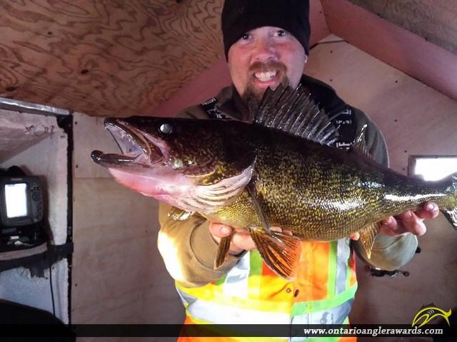 """29"""" Walleye caught on Lake Rosseau"""