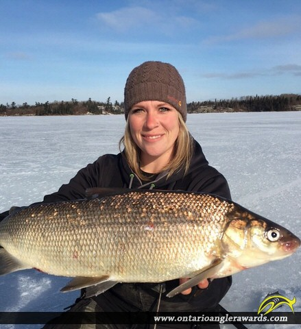 """26"""" Whitefish caught on Lake of the Woods"""