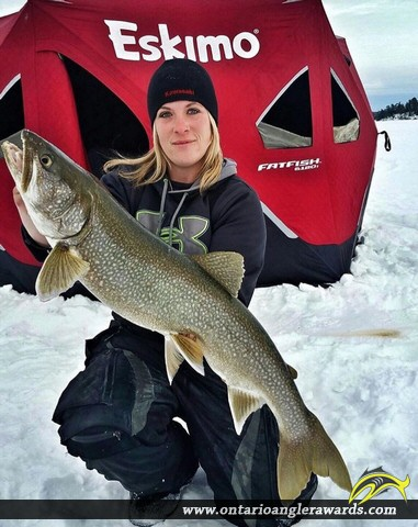"35.5"" Lake Trout caught on Lake of the Woods"