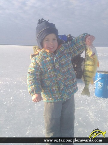 "14.5"" Yellow Perch caught on Lake Simcoe"