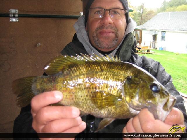 """12"""" Rock Bass caught on Whitefish Lake"""
