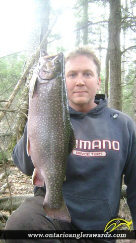 "19.00"" Brook/Speckled Trout caught on Little Beaver"