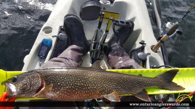 "26.75"" Lake Trout caught on Big Rideau Lake"