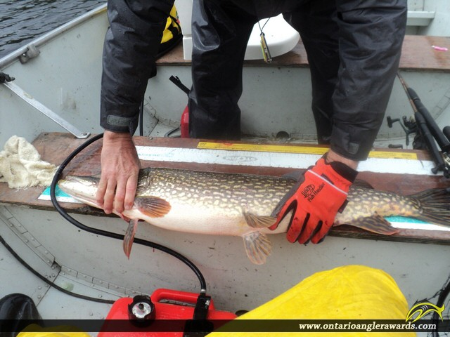 """42.5"""" Northern Pike caught on McDowell Lake"""