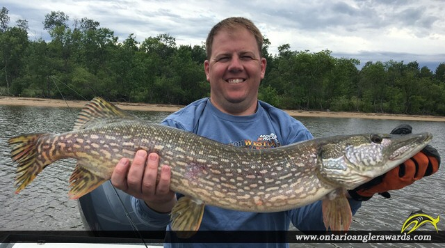 """37"""" Northern Pike caught on Lake of the Woods"""