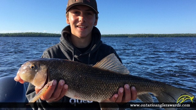 """22"""" Whitefish caught on Lake of the Woods"""