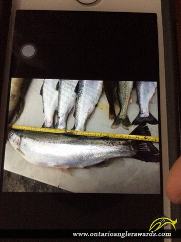 """25"""" Rainbow Trout caught on Lake Erie"""