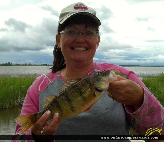 """12"""" Yellow Perch caught on Lake of the Woods"""