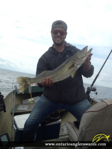 "30"" Walleye caught on Lake Erie"