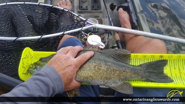 "17"" Smallmouth Bass caught on Secret lake"
