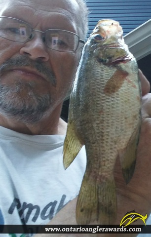 "10.3"" Rock Bass caught on Trout Lake"