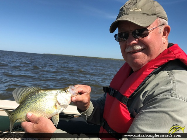"""12"""" Black Crappie caught on Lake of the Woods"""