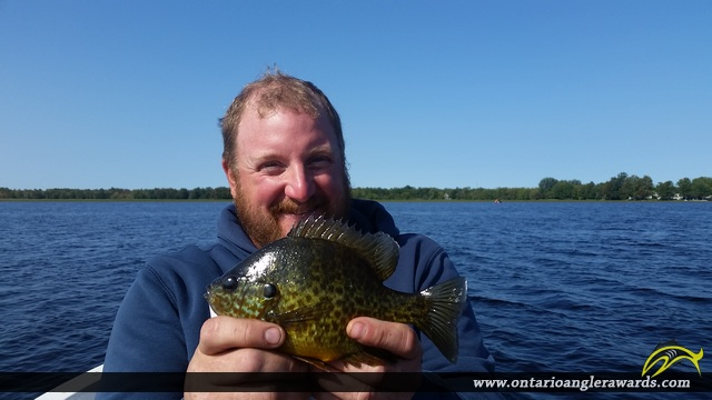 "9"" Bluegill caught on Mississippi Lake"
