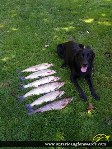 "22"" Whitefish caught on Bernard"