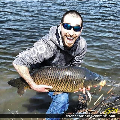 "34"" Carp caught on Speed River"
